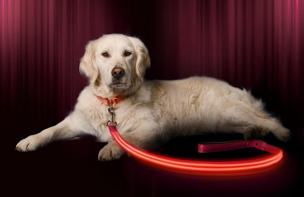 Illumiseen LED USB Rechargeable Dog Leash