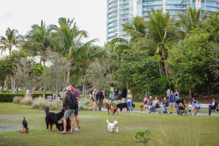 Cavapoo in dog park