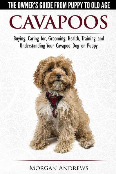 cavapoo book