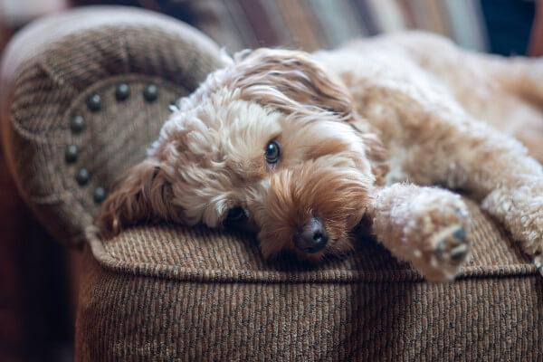 Bad smell in dogs